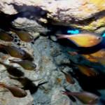 神山ラビリンスの船下のミニ洞窟151031
