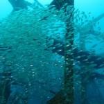 フタツネの漁礁 16.10.02