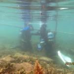 OW海洋トレーニング風景 170728