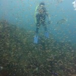 1の根にてネンブツダイの幼魚の群れ 18.09.09