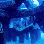漁礁下のアカククリ 19.11.04